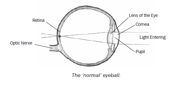Normal Eye - Vision Improvement