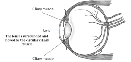 Interesting Facts About Your Eyesight likewise Thing besides 400695369547 as well A Challenge To Progressive Theo Bloggers in addition Astigmatism. on circular lens